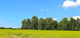 Земельные участки в деревне Подберезы с выгодой до 70 тысяч рублей